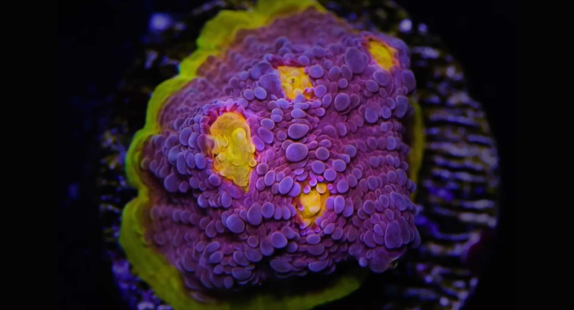 Photoshopped Coral
